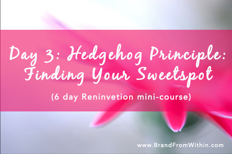Day 3 {The Hedgehog Principle} Finding Your Sweetspot: Reinvention Series